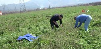 Türk Lirası: Doğadaki şifa deposu 'Çoban Çantası' geçim kaynağı oldu