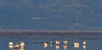 Marmara Gölü: Manisa'nın 'Kuş Cenneti'nde çoğunluk sakar mekelerin