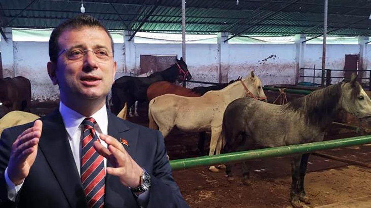 İBB'nin Adalar'dan toplatıp sahiplendirdiği atlar tartışma konusu oldu! Hatay'a gönderilen 50 at kayıp thumbnail