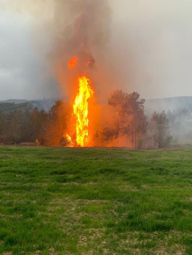 Muğla'nın iki ilçesinde ormanlık alanda yangın çıktı