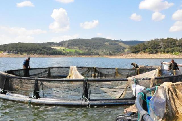 Denizi olmayan Manisa'dan dünyaya balık ihracı