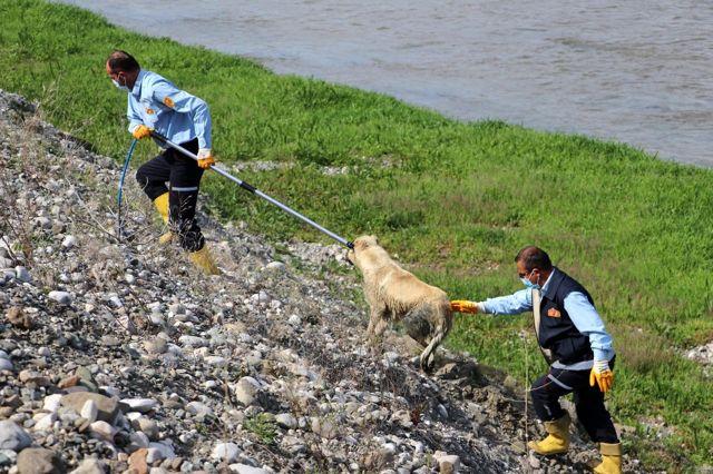 Son dakika haberleri... Amasya'da ırmağa düşen köpeği itfaiye kurtardı