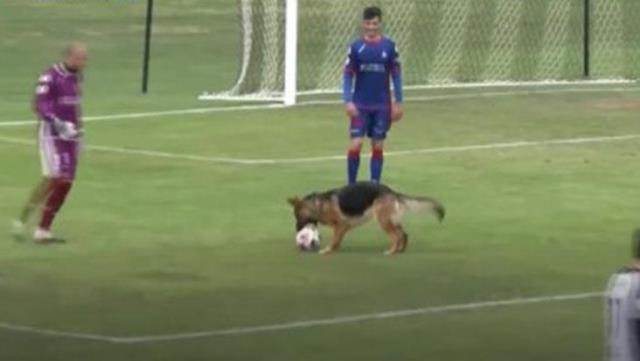 In Spain, the match was stopped so that the dog that jumped on the field during the match could play with the ball.