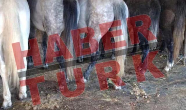 İBB'nin Hatay'a gönderdiği kayıp 100 atla ilgili kan donduran detaylar! Çiplerini çıkarmak için ameliyathane kurmuşlar