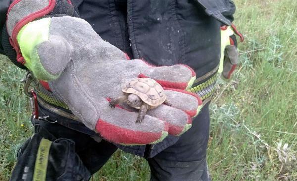 Çukura düşen kaplumbağa ve yavrusunu itfaiye kurtardı