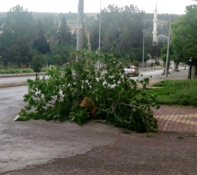 Ağaç rüzgara dayanamadı