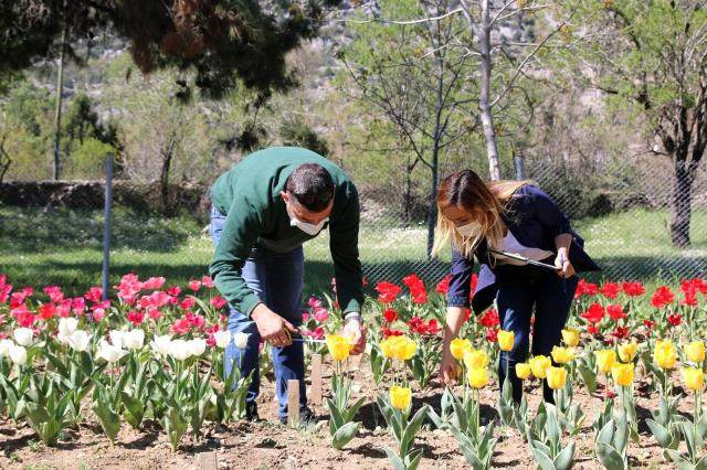 Son dakika: Antalya'da 10 bin lale soğanının açan çiçekleri görsel şölen sunuyor