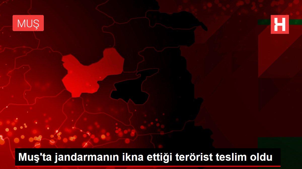 Muş'ta jandarmanın ikna ettiği terörist teslim oldu