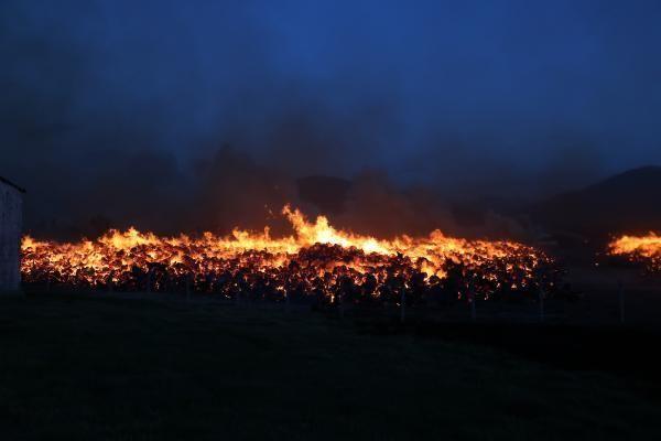Afyonkarahisar'da biyoenerji tesisi bahçesindeki ağaç köklerinde yangın çıktı (2)- Yeniden