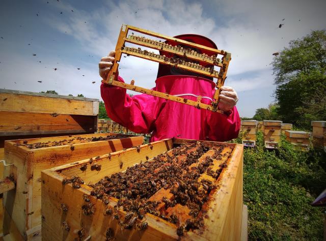 Gram gram sağılan arı sütünün kilosu 8 bin liradan satılıyor