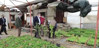 Baki Demirbaş: Çubuk Belediye Başkanı Demirbaş, sebze fidesi ve çiçek üreticilerini ziyaret etti