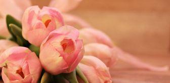 Yunanistan: Anneler günü ne zaman? 8 Mayıs mı 9 Mayıs mı? Anneler günü Mayıs ayının kaçında kutlanıyor? Anneler günü ayın kaçı?