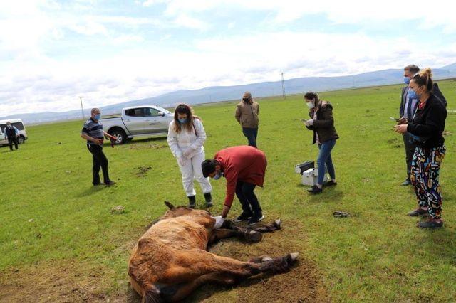 Son dakika... Ayağı kırılan atın yardımına Tarım ve Orman Bakanlığı görevlileri yetişti
