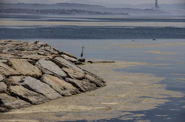 Marmara'da deniz salyası tehlikesi sürüyor: 15 senedir böyle bir durumla karşılaşmadım