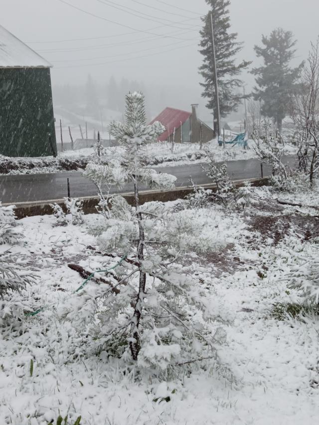 Mayısta kar sürprizi! Karadeniz yaylaları beyaza büründü