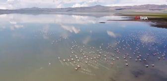 Erçek Gölü: Van Gölü Havzası'nın narin kuşları flamingolar