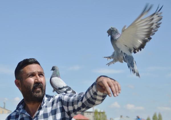 Yok böyle bir tutku! 300 güvercin için arazi satın alıp, 350 bin lira harcadı