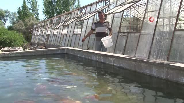 Domatesleri kaldırıp serada balık üretimine başladı