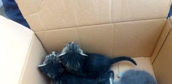 Tekirdağ: - Mahsur kalan kedilerin yardımına itfaiye koştu