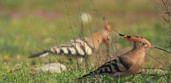 Kayseri: Türkiye dünya sıralamasında 194 gözlem ve 289 kuş türü ile 31'inci sırada yer aldı