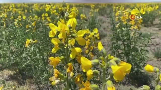 Bu çiçeği izinsiz koparmanın cezası 73 bin TL