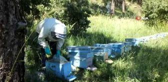 Madra Dağı: Balıkesir'de bal fiyatlarındaki yükseliş arılara olan itibarı da artırdı
