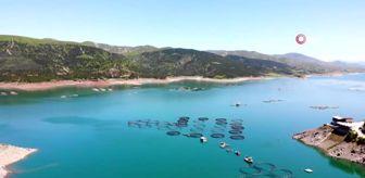 İhracat: - Yılda 5 bin 500 ton balık üretilerek Avrupa'ya ihraç ediliyor