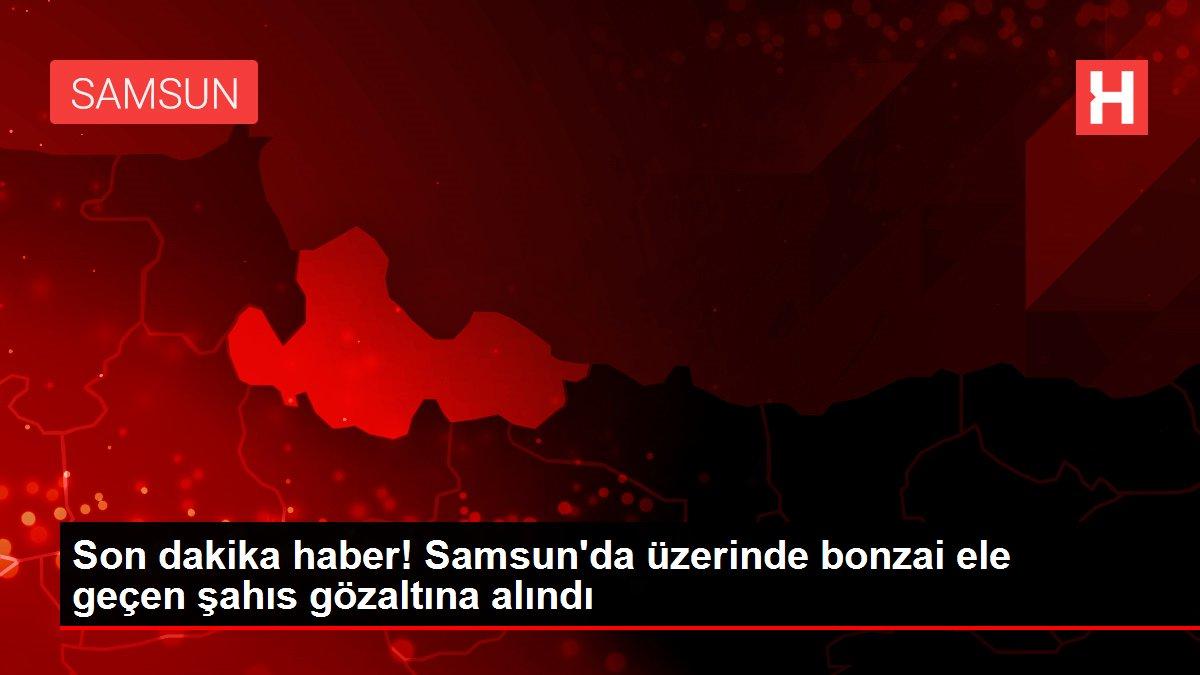 Son dakika haber! Samsun'da üzerinde bonzai ele geçen şahıs gözaltına alındı