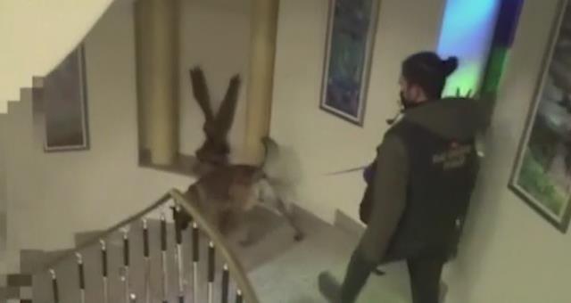 Son Dakika: Sedat Peker'in evinin arandığı operasyonun görüntüleri yayınlandı! İşte o anlar