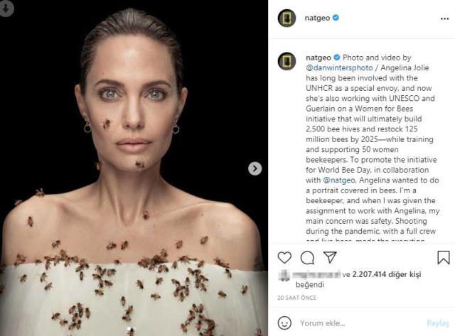 Angelina Jolie arılarla poz verdi: 18 dakika öylece durdu