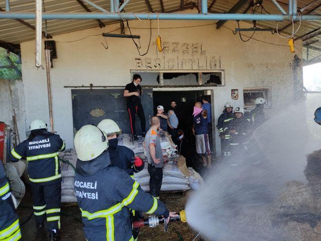 Son dakika haberleri! Kocaeli'de büyükbaş besi çiftliğinde çıkan yangın söndürüldü