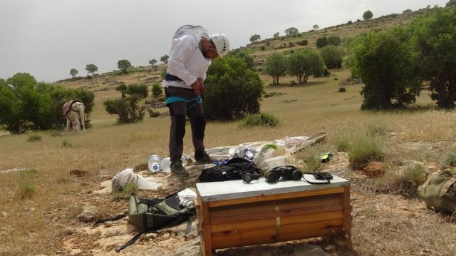 Beden öğretmeni, hobi olarak toplamaya başladığı kaya balının kilosunu 1000 liradan satıyor
