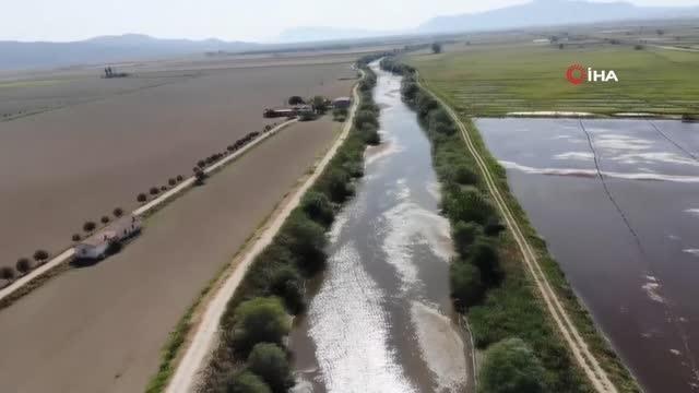 Büyük Menderes kuraklığa karşı büyük bir mücadele veriyor