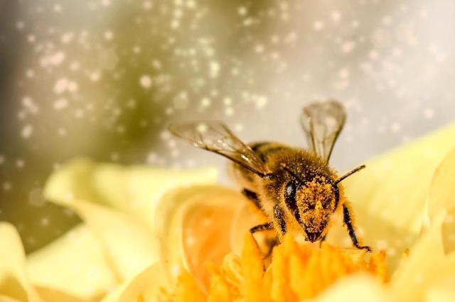 Arılarla ilgili ilginç bilgiler! Arı sokmasına ne iyi gelir? Bal arıları ile ilgili hadis ve ayet var mı? Arılar hakkında ilginç bilgiler nelerdir?
