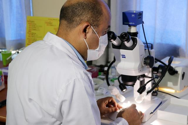 Newly discovered beneficial insect species in Anatolia will be named after Aziz Sancar