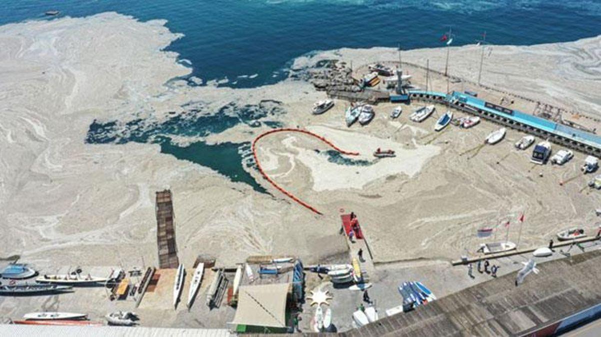 Marmara Denizi'ni etkisi altına deniz salyasıyla ilgili ilk sonuçlar geldi! Tek hücreli canlı tespit edildi thumbnail