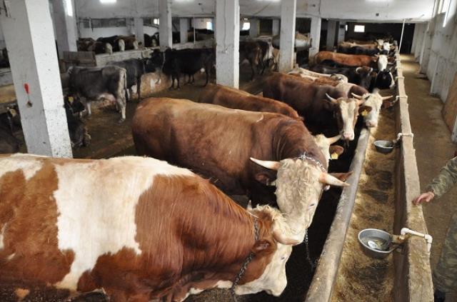 Kurbanlık pazarları hareketlenmeye başladı! Fiyatlarda hayvan başına bin liralık artış var