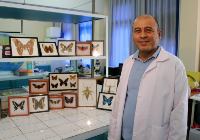 44 insect species, mostly hunter and agricultural useful, were discovered in Anatolia