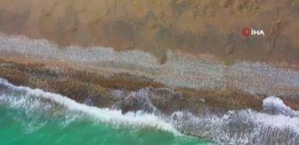 Erdemli Belediyesi: Mersin'de deniz kaplumbağaları için sahil temizliği