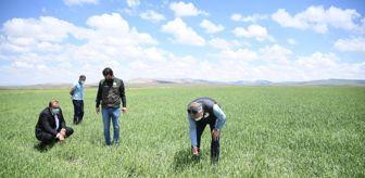 Örenşehir: Kayseri'nin Pınarbaşı ilçesinde dolu 5 bin dekar ekili alana zarar verdi