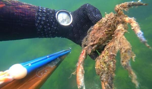 Müsilajın deniz altındaki tahribatı görüntülendi! Altı üstünden daha fena