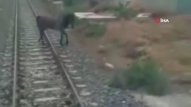 Son dakika haberi... Ölüme terk edilen atı makinistler kurtardı