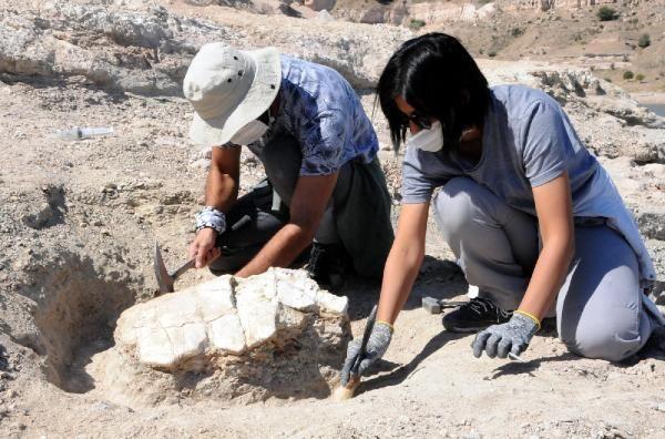 Kayseri'de 7,5 milyon yıllık yeni fosiller bulunup, çıkarılıyor