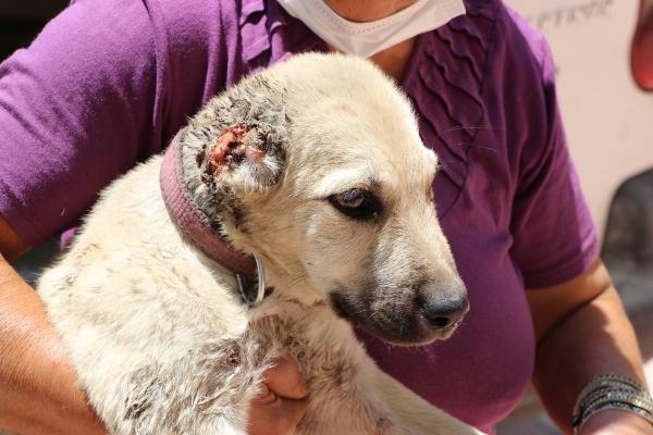 In Sanliurfa, puppies have been found with their ears cut off