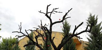 Kırşehir Emniyet Müdürlüğü: Şehitlik Ağacı'ndan asker künyelerini çalan şüpheliler yakalandı