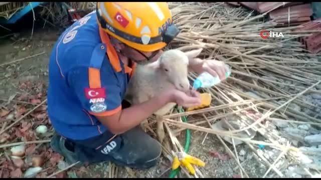 Çöken ağıldan 205 koyun kurtarıldı, 15'i telef oldu