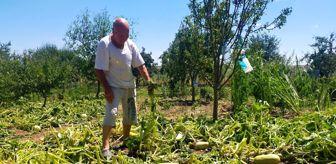 İskender: Edirne'de sağanak ve dolu tarım alanlarına zarar verdi