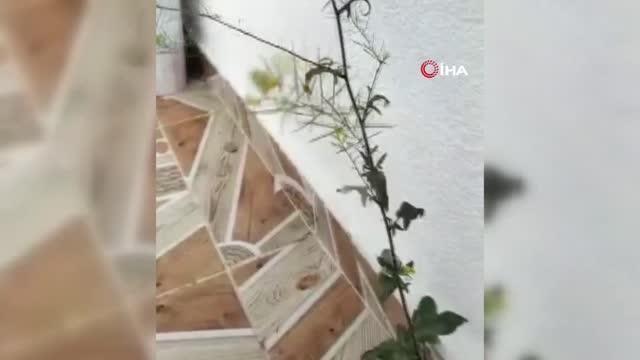 Binanın 4. katında fayans arasından çıkan çiçek şaşırttı