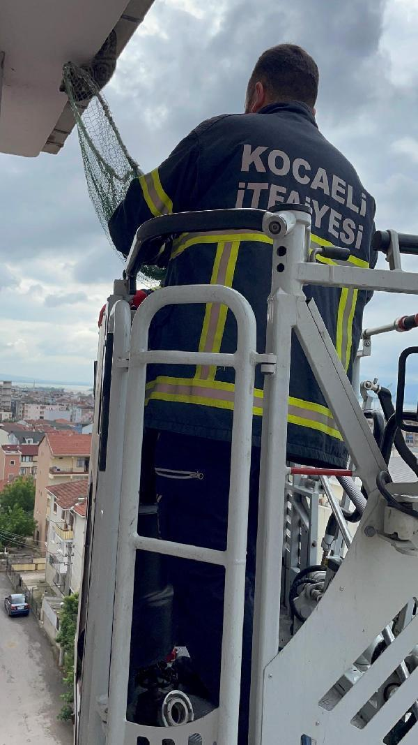 The kitten stuck on the roof saved by the fire department