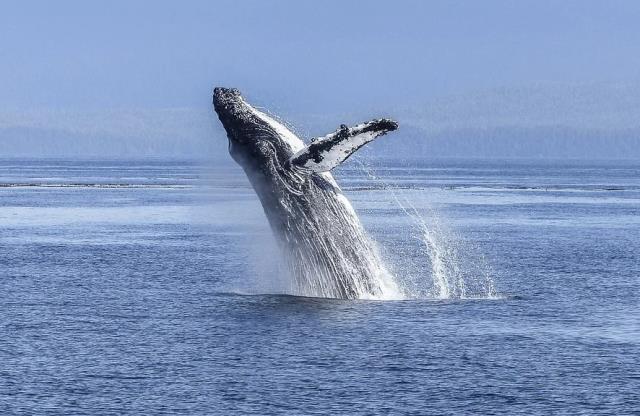 Rüyada balina görmek ne demektir? Rüyada balina görmek anlamı nedir?
